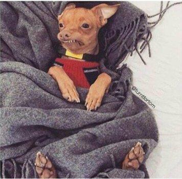 funny-dog-with-teeth-front-sleeping